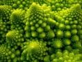 fractal_127