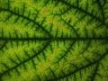fractal_130